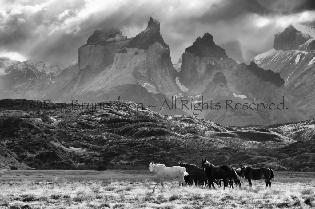 Horses and the Cuernos del Paine, Torres del Paine National Park, Chile