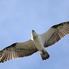 The Spit birds, Gold Coast, Queensland.