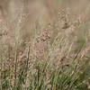 The Spit grasses, Gold Coast, Queensland.