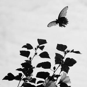 IMG_2702_DxO_©Ch  Mouton