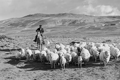 IMG_5555-©Ch-Mouton