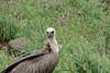 122 vulture a