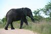 118 elephant xing