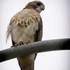 Portrait of a watch-bird