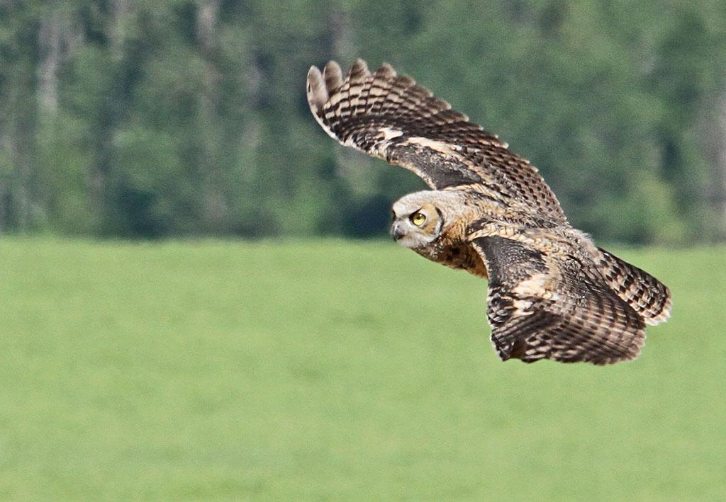 IMAGE: https://photos.smugmug.com/All-the-Birds/Birds/i-NSXNS9R/0/6d3577ee/O/084_edited-1.jpg