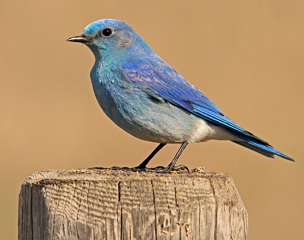 IMAGE: https://photos.smugmug.com/All-the-Birds/Birds/i-x8Mfzns/0/O/148_edited-1.jpg