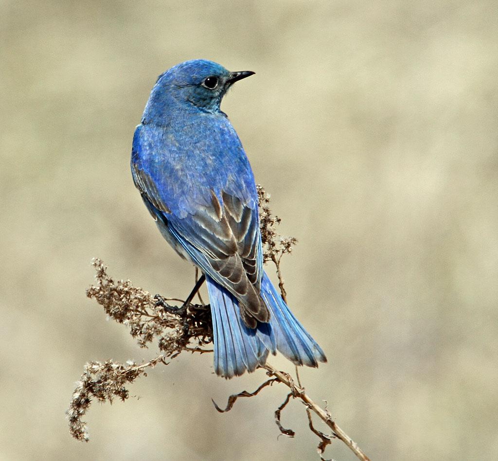IMAGE: https://photos.smugmug.com/All-the-Birds/Birds/i-zj7PNBp/0/O/236_edited-1.jpg