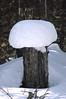 canadian rockies---jasper area...snow atop tree trunk...