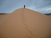 great trip----utah, coral pink sand dunes, state park, just outside of zion national park