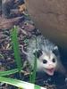 critter in yard