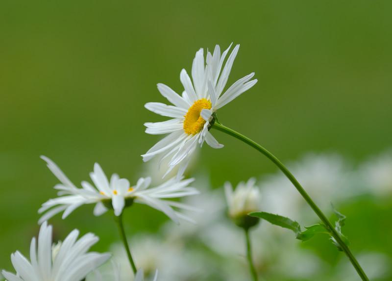 Bloomin' Beautiful
