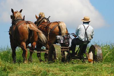 Amish man cutting hay, Grantsville, Maryland.