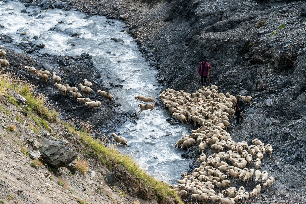 Herders and sheep crossing river