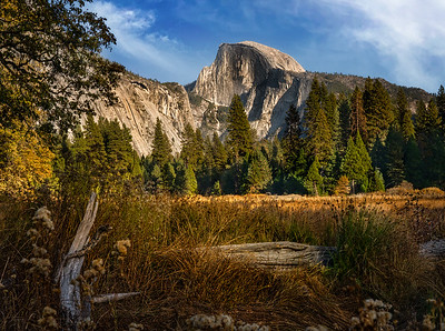Meadow View of Half Dome - Yosemite