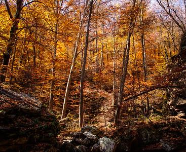 Autumn Forest Trail, Buffalo River National Forest (Ozark Mountains, Arkansas)