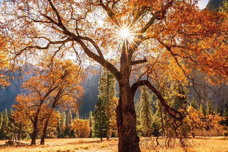 Backlit Fall Color at Yosemite