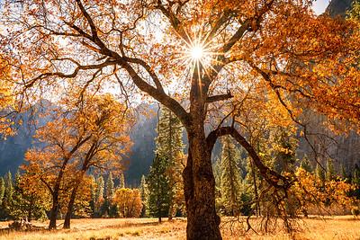 Backlight Fall Color at Yosemite