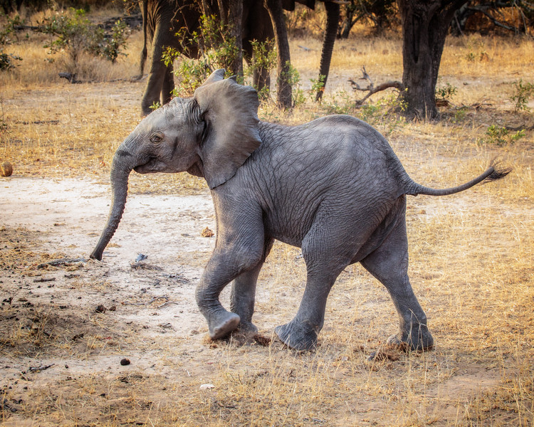 Playful Walk (South Africa)