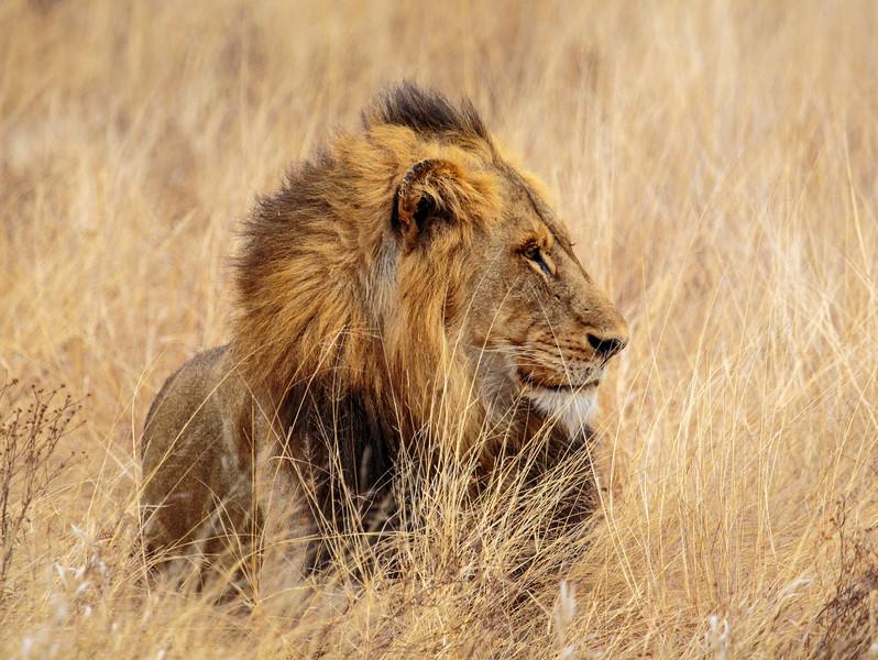 King's Profile