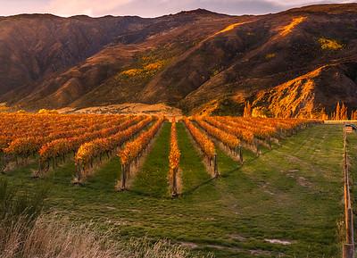 "Sunset View from Kinross ""Wineyard"""