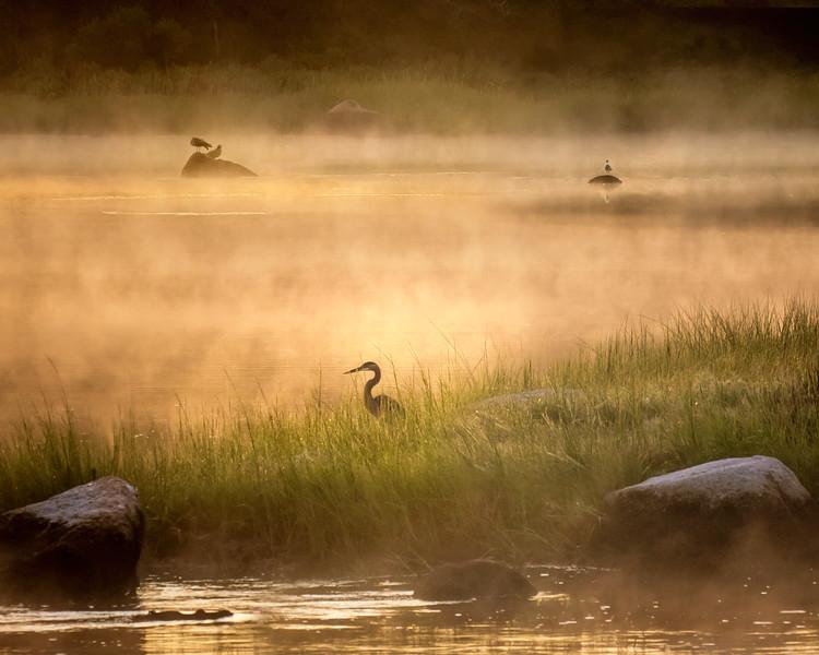 Foggy Morning at Eel Pond