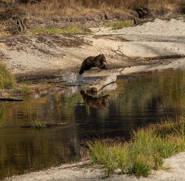 Leaping Bear Reflection (Yosemite)