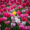 The Standout - Dallas Blooms 2018
