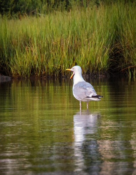 Bird Talk - Cape Cod