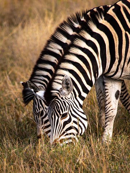 Matching Stripes