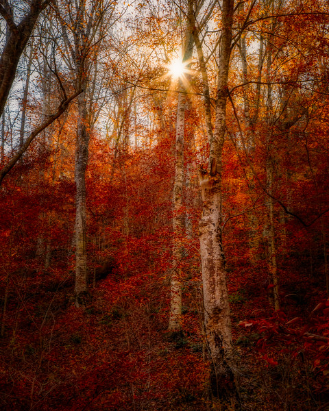 Last Colors of Fall (Buffalo River National Forest)