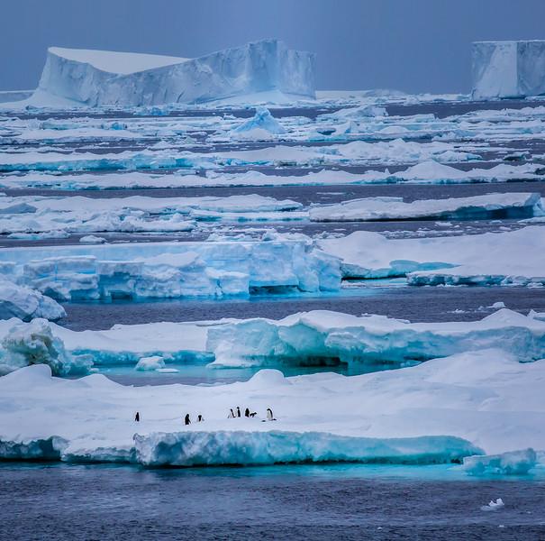 Iceberg field with penguins - Antarctica