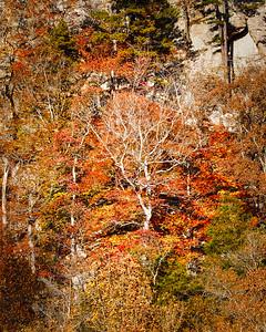 Mountainside Color - Ozark Mountains