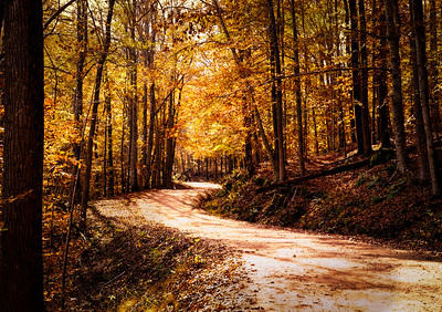 Sunshine on a Winding Forest Road (Ozark Mountains, Arkansas)