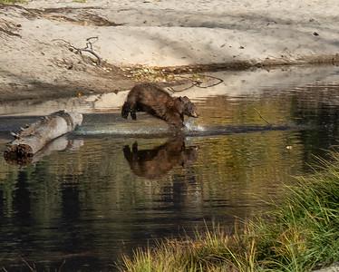 River Leap (Yosemite)