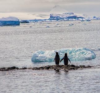 Holding Hands - Antarctica
