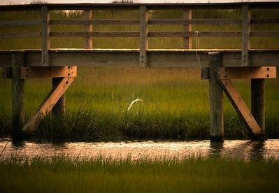 Tidal Marsh Stalker