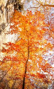 Cliffside Sunlight on Autumn Color