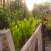 lettuce, green chaser led's, and sunshine at stattgarten