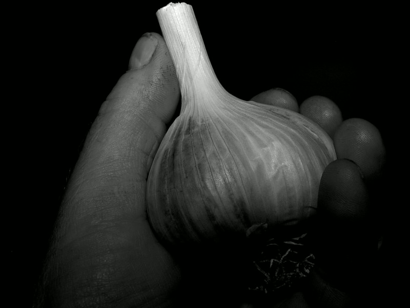 Hand Held Garlic.