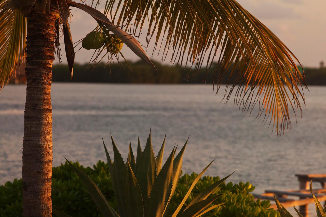 Lagoon Side of Cancun Island