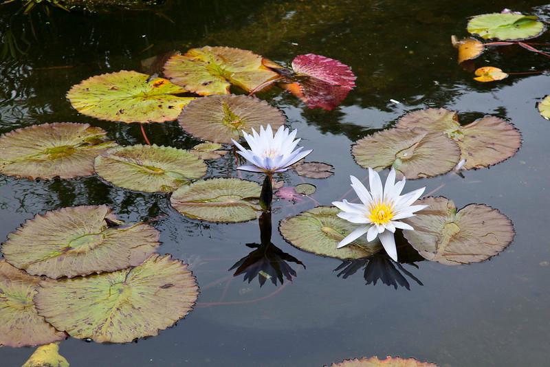 Bethesda Fountain Flora