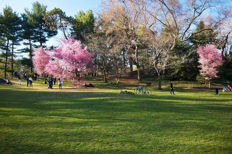 Pre-Spring Blooms