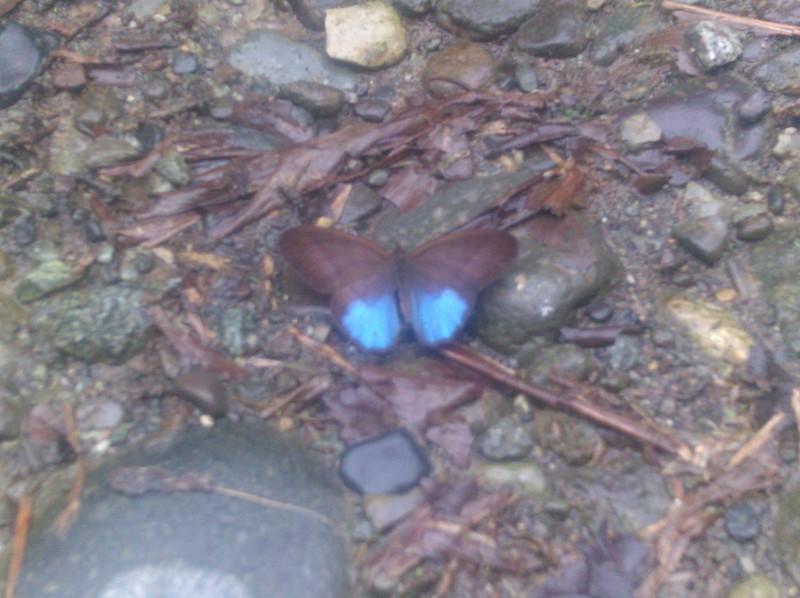 butterfly mariposa