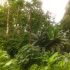 jungley jungle, the backyard.