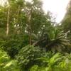 jungley jungle, the backyard.