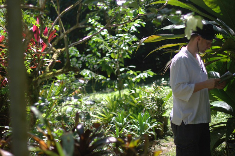 skytee in the bromeliad nursery at the botanical garden in puerto viejo