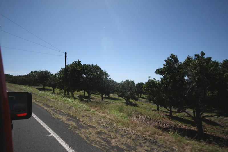 macadamia nut orchard!