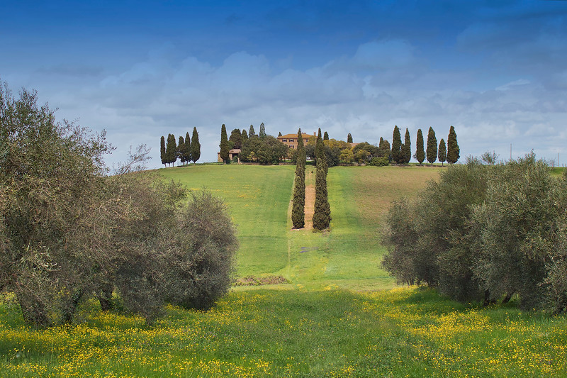 House in Val D'Orcia with cypress and olive trees