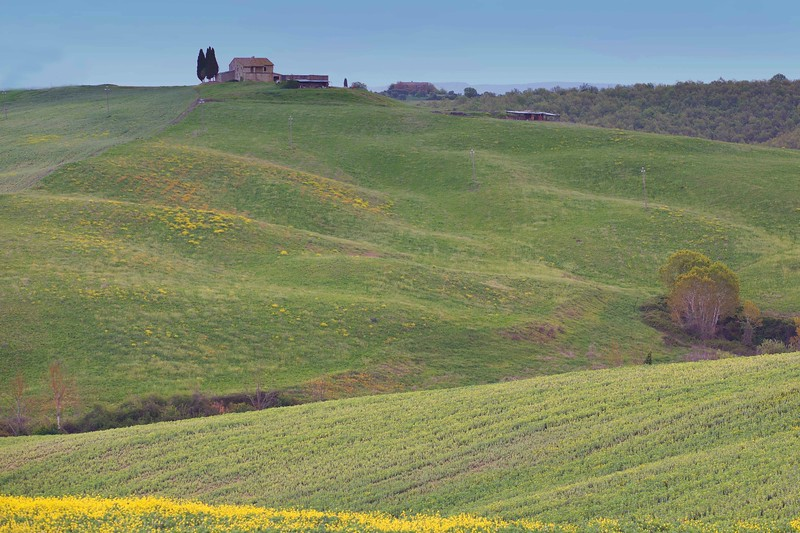 Spring Field in Tuscany