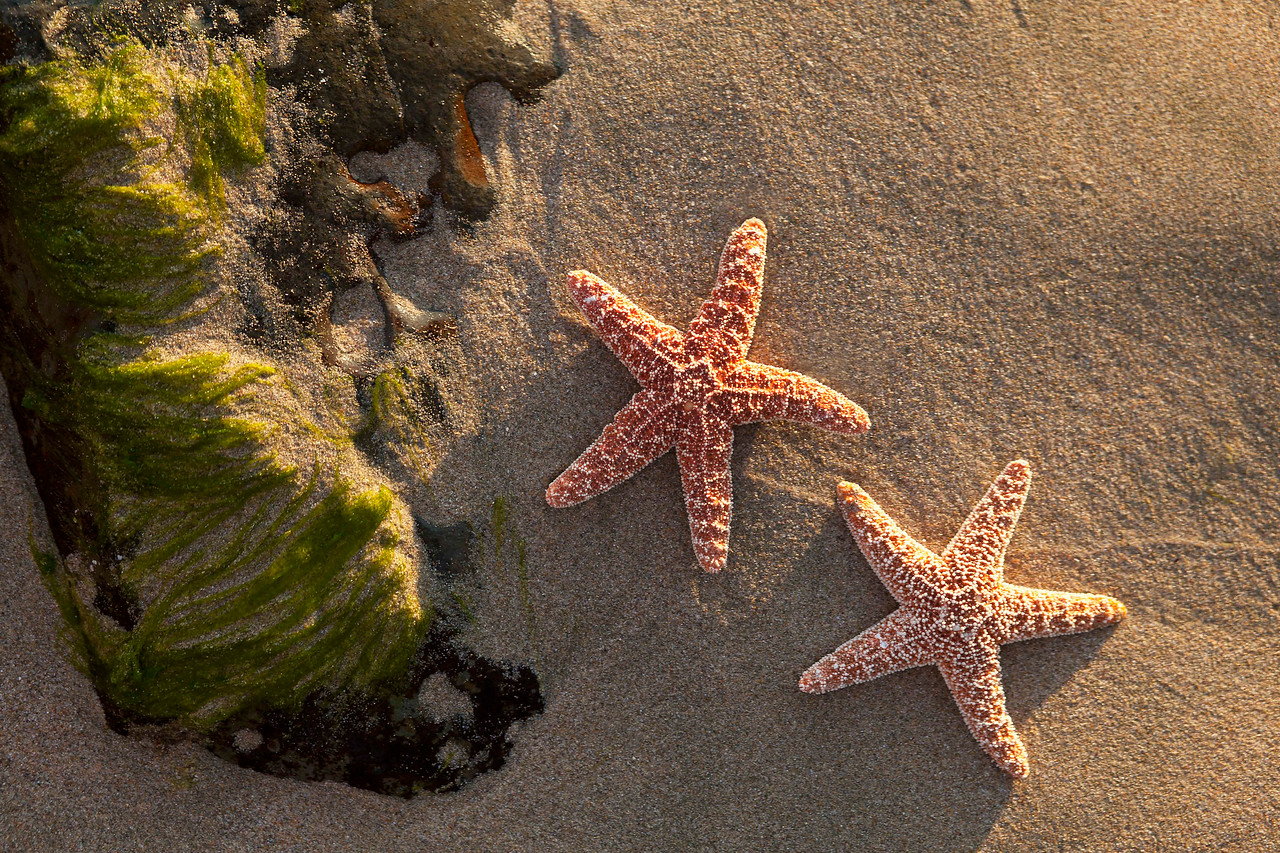 Starfish, Las Brisas Beach